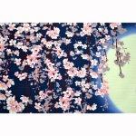 画像2: 【小風呂敷】 日本の春 (2)